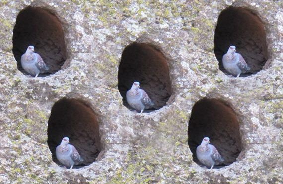 pigeon-in-hole
